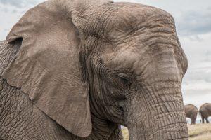 elefante-animali-con-più-memoria